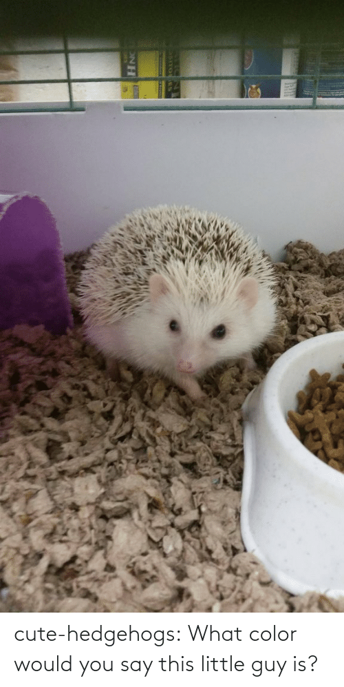 What Color: cute-hedgehogs:  What color would you say this little guy is?