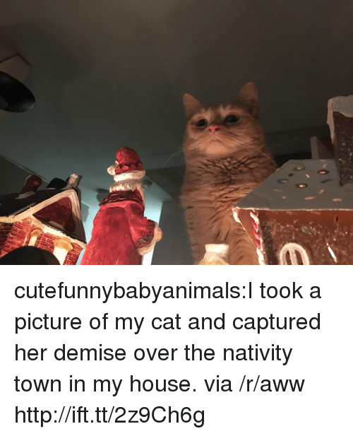 Aww, My House, and Target: cutefunnybabyanimals:I took a picture of my cat and captured her demise over the nativity town in my house. via /r/aww http://ift.tt/2z9Ch6g