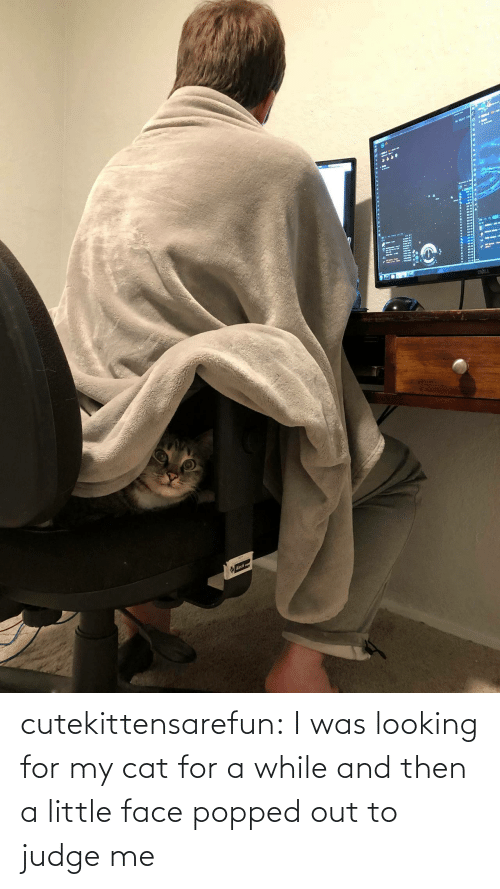 While: cutekittensarefun: I was looking for my cat for a while and then a little face popped out to judge me