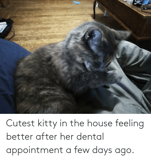 a-few-days: Cutest kitty in the house feeling better after her dental appointment a few days ago.