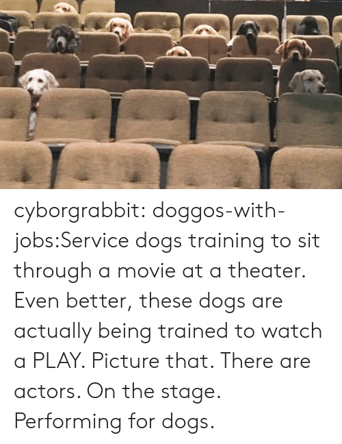 theater: cyborgrabbit:  doggos-with-jobs:Service dogs training to sit through a movie at a theater.  Even better, these dogs are actually being trained to watch a PLAY. Picture that. There are actors. On the stage. Performing for dogs.