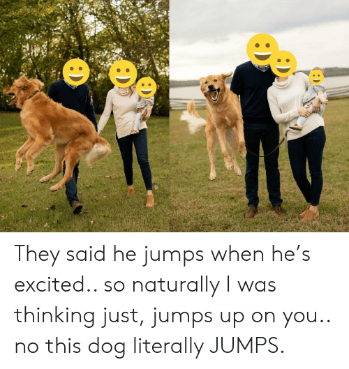 Dog, They, and You: : D They said he jumps when he's excited.. so naturally I was thinking just, jumps up on you.. no this dog literally JUMPS.
