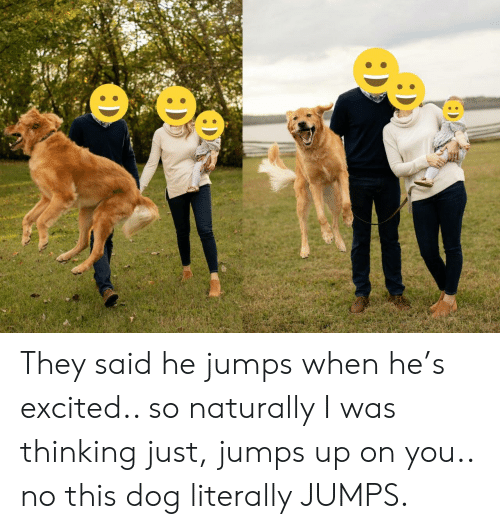 Dog, They, and You: :D They said he jumps when he's excited.. so naturally I was thinking just, jumps up on you.. no this dog literally JUMPS.