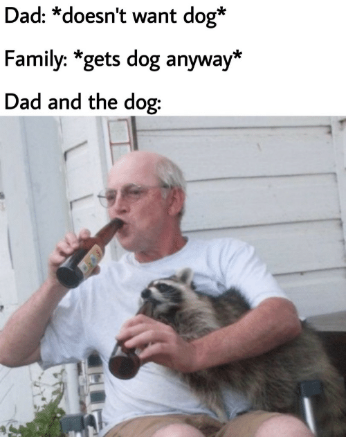 Dad, Family, and Dog: Dad: *doesn't want dog*  Family: *gets dog anyway*  Dad and the dog: