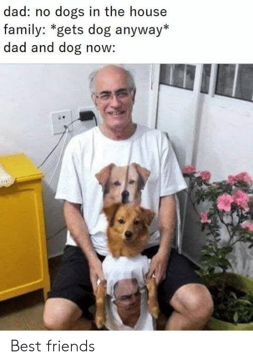 Dad, Dank, and Dogs: dad: no dogs in the house  family: *gets dog anyway*  dad and dog now: Best friends