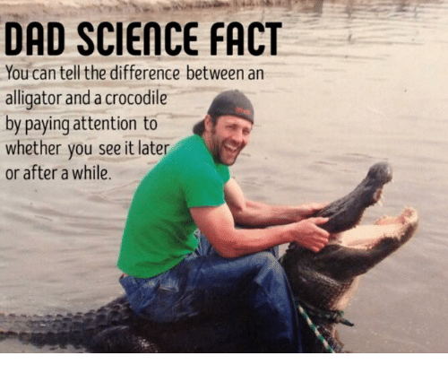 Dad, Dank, and Alligator: DAD SCIEnNCE FACT  You can tell the difference between an  alligator and a crocodile  by paying attention to  whether you see it later  or after a while.