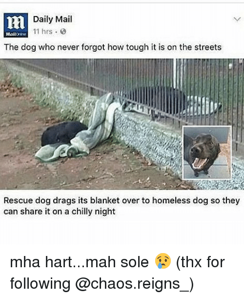 Homeless, Memes, and Streets: Daily Mail  11 hrs  The dog who never forgot how tough it is on the streets  Rescue dog drags its blanket over to homeless dog so they  can share it on a chilly night mha hart...mah sole 😢 (thx for following @chaos.reigns_)