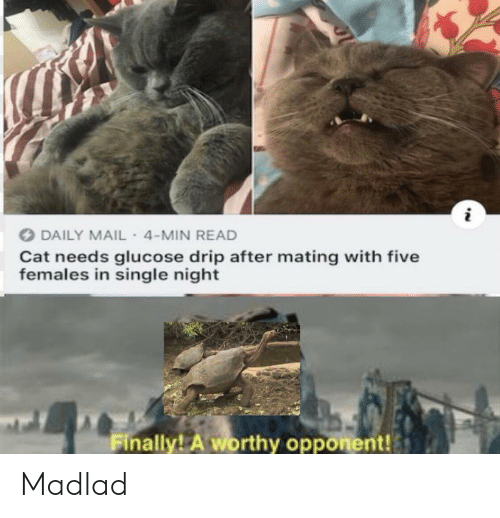 Females: DAILY MAIL- 4-MIN READ  Cat needs glucose drip after mating with five  females in single night  Finally! A worthy opponent! Madlad