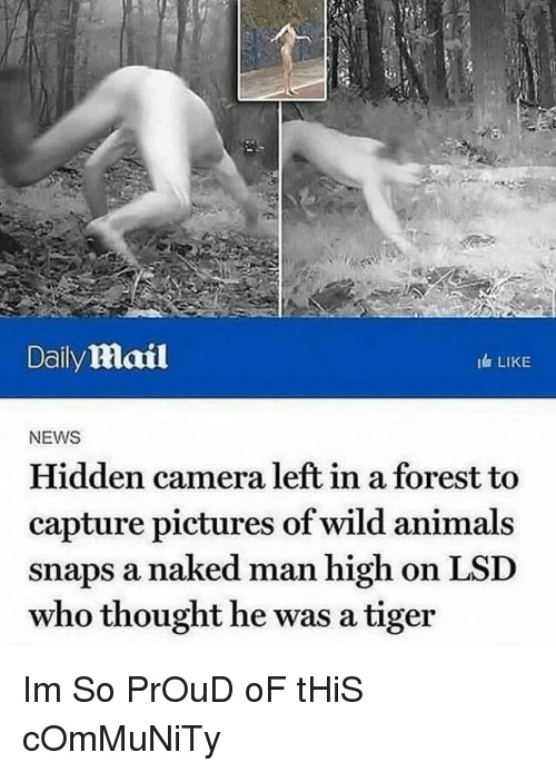 Animals, Community, and News: Daily mail  I LIKE  NEWS  Hidden camera left in a forest to  capture pictures of wild animals  snaps a naked man high on LSD  who thought he was a tiger Im So PrOuD oF tHiS cOmMuNiTy