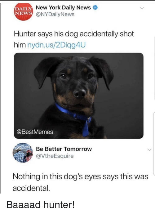 Nydailynews: DAILY  NEWS  New York Daily News  @NYDailyNews  Hunter says his dog accidentally shot  him nydn.us/2Diagg4UU  @BestMemes  Be Better Tomorrow  @VtheEsquire  Nothing in this dog's eyes says this was  accidental. Baaaad hunter!