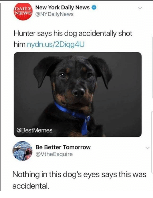 Nydailynews: DAILY  NEWS  New York Daily News  @NYDailyNews  Hunter says his dog accidentally shot  him nydn.us/2Diqg4U  @BestMemes  Be Better Tomorrow  @VtheEsquire  Nothing in this dog's eyes says this was  accidental