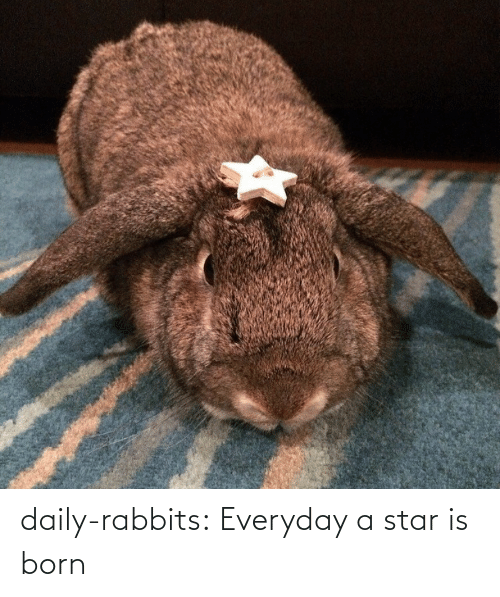 a star is born: daily-rabbits:  Everyday a star is born