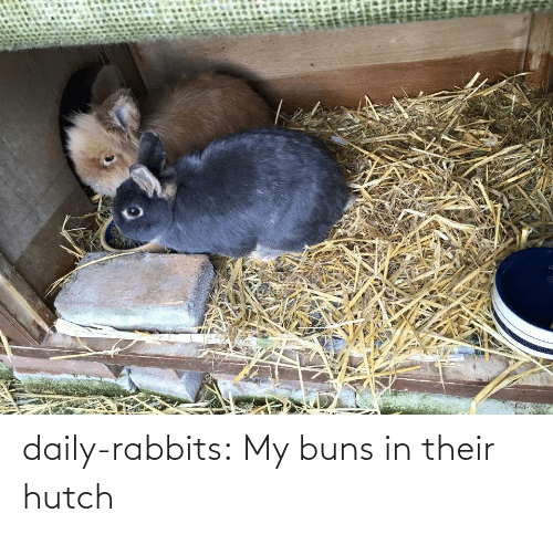 Hutch: daily-rabbits:  My buns in their hutch