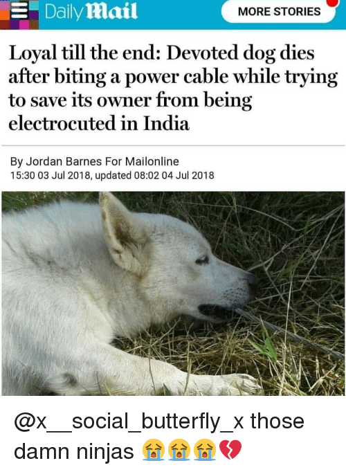 electrocuted: Dailymail  MORE STORIES  Loyal till the end: Devoted dog dies  after biting a power cable while tryıng  to save its owner from being  electrocuted in India  By Jordan Barnes For Mailonline  15:30 03 Jul 2018, updated 08:02 04 Jul 2018 @x__social_butterfly_x those damn ninjas 😭😭😭💔