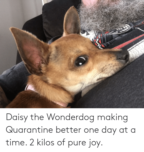 at-a-time: Daisy the Wonderdog making Quarantine better one day at a time. 2 kilos of pure joy.