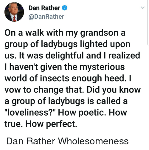 """lighted: Dan Rather  @DanRather  On a walk with my grandson a  group of ladybugs lighted upon  us. It was delightful and I realized  I haven't given the mysteriou:s  world of insects enough heed. I  vow to change that. Did you know  a group of ladybugs is called  """"loveliness?"""" How poetic. How  true. How perfect. Dan Rather Wholesomeness"""