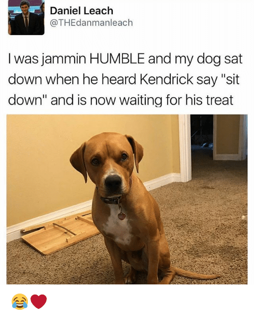 """Jammin: Daniel Leach  @THEdanmanleach  I was jammin HUMBLE and my dog sat  down when he heard Kendrick say """"sit  down"""" and is now waiting for his treat 😂❤️"""