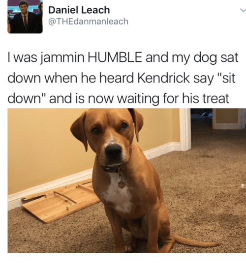 """Jammin: Daniel Leach  @THEdanmanleach  Iwas jammin HUMBLE and my dog sat  down when he heard Kendrick say """"sit  down"""" and is now waiting for his treat"""