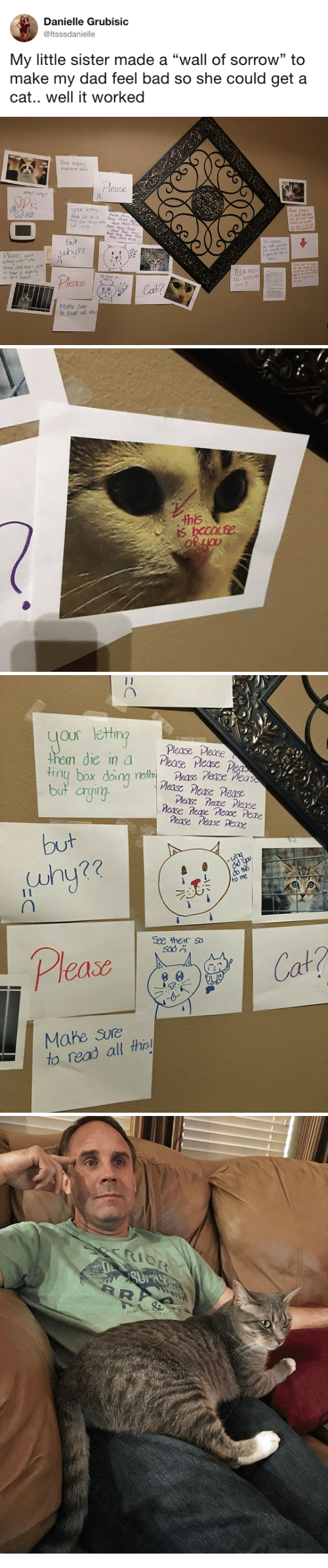 "Bad, Dad, and Family: Danielle Grubisic  @ltsssdanielle  My little sister made a ""wall of sorrow"" to  make my dad feel bad so she could get a  cat.. well it worked  35   Your Pillina  ininocent Ines  uhy why?  ease  yor i  Phase Por  but  Please, yous  nu nofe and naa  alore, and hver got  to haxe a family  or feni loved  re  ease !  ING INNOCa  LIVES  Cat?  Mahe Se  to read all廾is   Our lethit  them die in a Pease Ple  tiny box doin nth' Pease Pease,neas  but aryintg  Please Please  Peas ease Mease  Mease Nerse Please  Rease Reasc Pease Pease  Pease  e Pease  but  (uhy??  to me  See their so  Cat?  Mahe Sure  to read all ths"