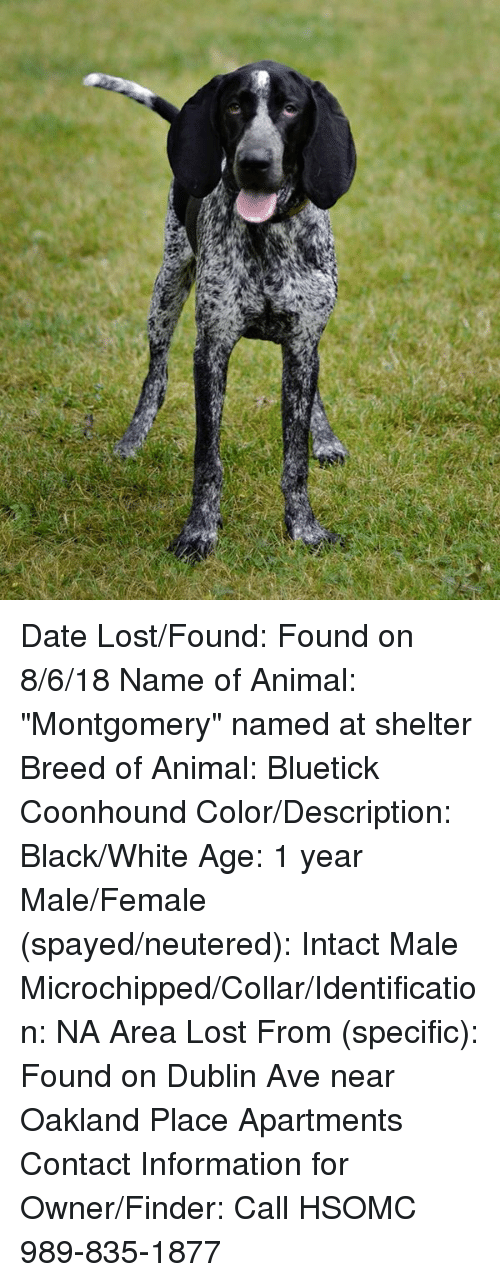 "Memes, Lost, and Animal: Date Lost/Found: Found on 8/6/18 Name of Animal: ""Montgomery"" named at shelter Breed of Animal: Bluetick Coonhound Color/Description: Black/White Age: 1 year Male/Female (spayed/neutered): Intact Male Microchipped/Collar/Identification: NA Area Lost From (specific):  Found on Dublin Ave near Oakland Place Apartments Contact Information for Owner/Finder: Call HSOMC 989-835-1877"