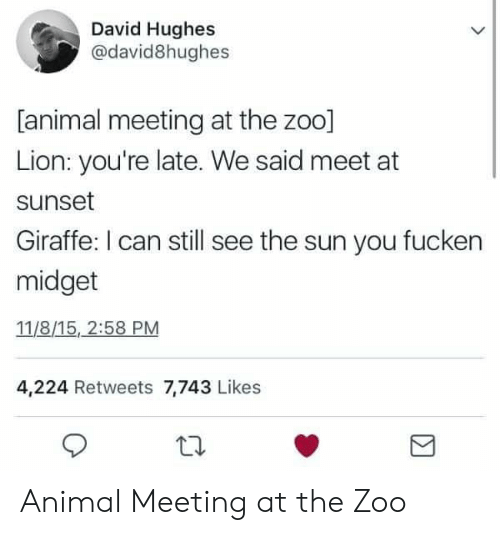Animal, Giraffe, and Lion: David Hughes  @david8hughes  [animal meeting at the zoo]  Lion: you're late. We said meet at  sunset  Giraffe: I can still see the sun you fucken  midget  11/8/15, 2:58 PM  4,224 Retweets 7,743 Likes Animal Meeting at the Zoo