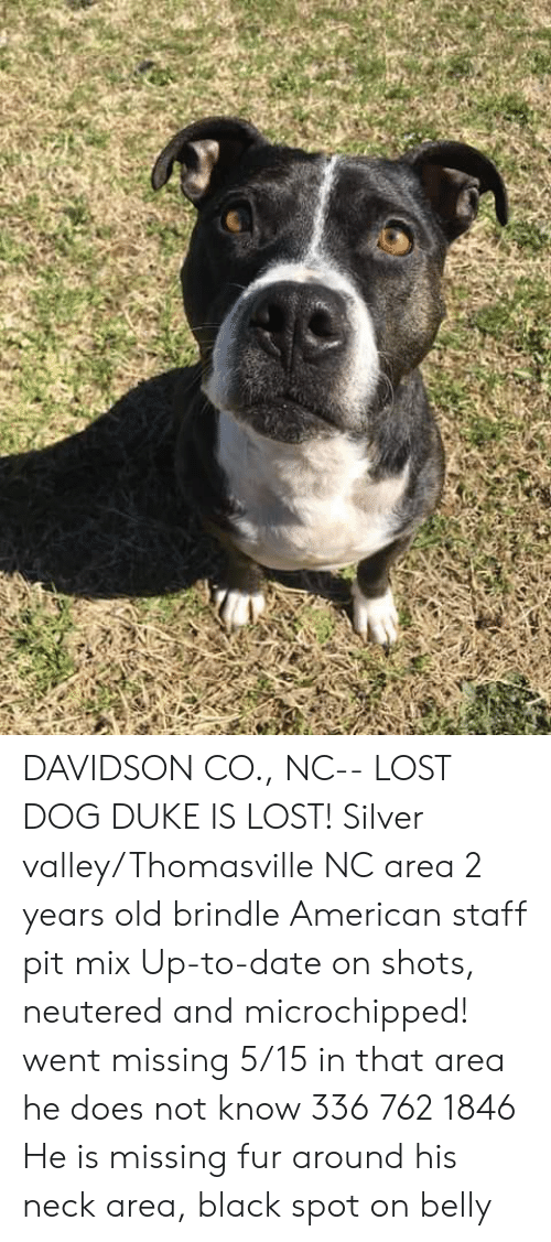 Memes, Lost, and American: DAVIDSON CO., NC-- LOST DOG  DUKE IS LOST!  Silver valley/Thomasville NC area 2 years old brindle American staff pit mix Up-to-date on shots, neutered and microchipped! went missing 5/15 in that area he does not know 336 762 1846 He is missing fur around his neck area, black spot on belly