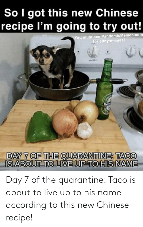 According: Day 7 of the quarantine: Taco is about to live up to his name according to this new Chinese recipe!