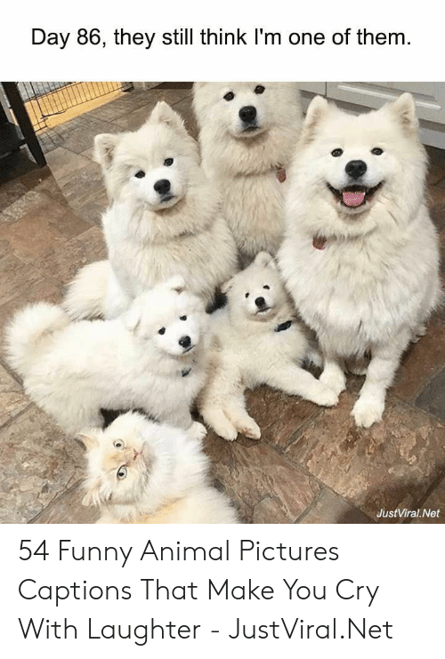 Captions: Day 86, they still think I'm one of them  JustViral Net 54 Funny Animal Pictures Captions That Make You Cry With Laughter - JustViral.Net