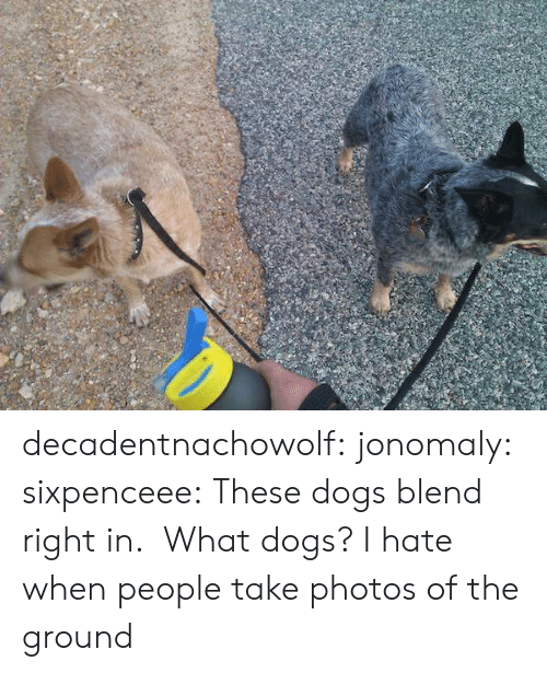 Dogs, Tumblr, and Blog: decadentnachowolf: jonomaly:  sixpenceee:  These dogs blend right in.   What dogs?  I hate when people take photos of the ground
