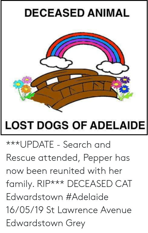 Dogs, Family, and Memes: DECEASED ANIMAL  LOST DOGS OF ADELAIDE ***UPDATE - Search and Rescue attended, Pepper has now been reunited with her family. RIP***  DECEASED CAT Edwardstown #Adelaide 16/05/19 St Lawrence Avenue Edwardstown Grey