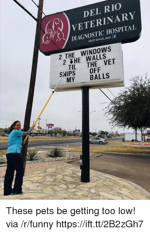 Funny, Windows, and Pets: DEL RIO  VETERINARY  DIAGNOSTIC HOSPITAL  delriovet.net f  2 THE WINDOWS  2&HE WALLS  2  TIL THE VET  SNIPS OFF  MY BALLS These pets be getting too low! via /r/funny https://ift.tt/2B2zGh7