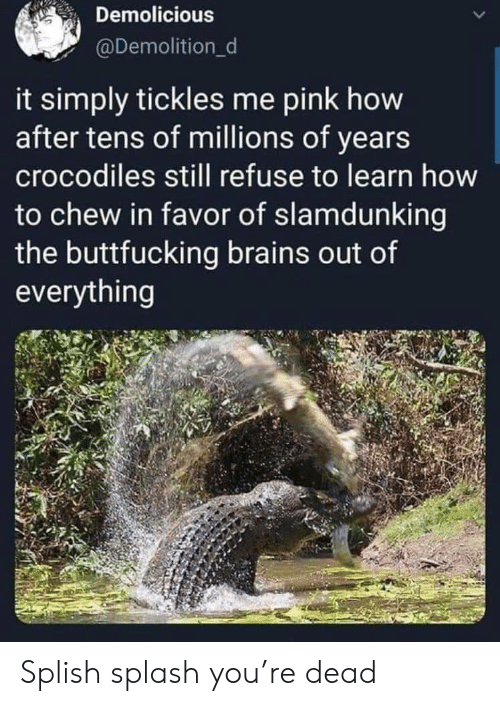 brains: Demolicious  @Demolition_d  it simply tickles me pink how  after tens of millions of years  crocodiles still refuse to learn how  to chew in favor of slamdunking  the buttfucking brains out of  everything Splish splash you're dead