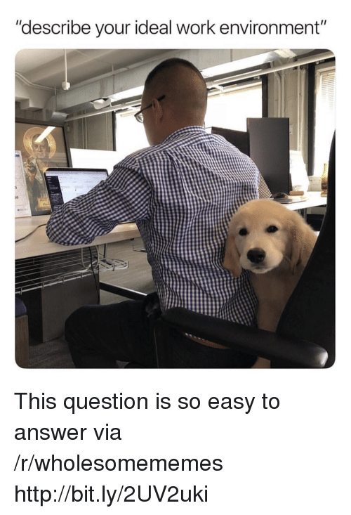 """Work, Http, and Answer: """"describe your ideal work environment""""  10 This question is so easy to answer via /r/wholesomememes http://bit.ly/2UV2uki"""