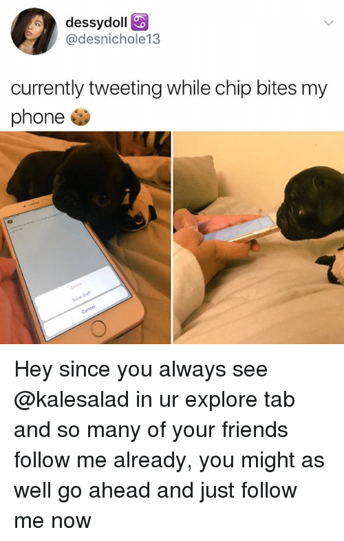 Friends, Memes, and Phone: dessydoll  @desnichole13  currently tweeting while chip bites my  phone Hey since you always see @kalesalad in ur explore tab and so many of your friends follow me already, you might as well go ahead and just follow me now