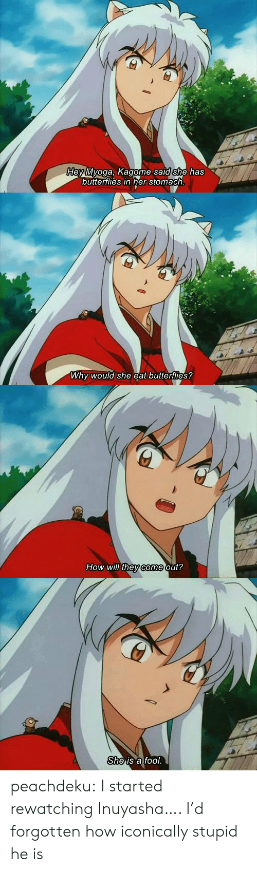 Target, Tumblr, and Blog: dey Myoga, Kagome sald she has  buttertlies in her stomach   Why would she eat butterflies?   How will they come out?   She is a fool. peachdeku:  I started rewatching Inuyasha…. I'd forgotten how iconically stupid he is