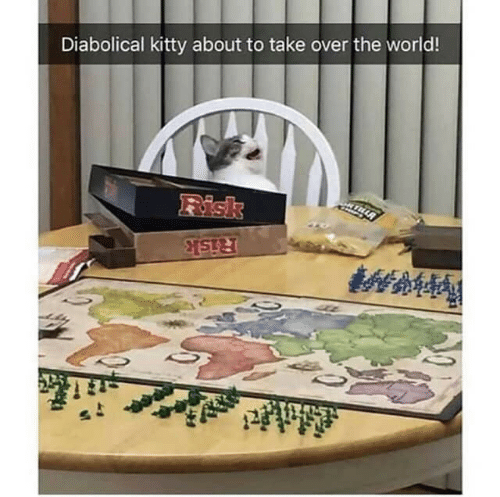 risk: Diabolical kitty about to take over the world!  Fisk  Risk