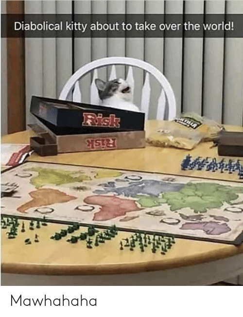 risk: Diabolical kitty about to take over the world!  Risk  Risk Mawhahaha