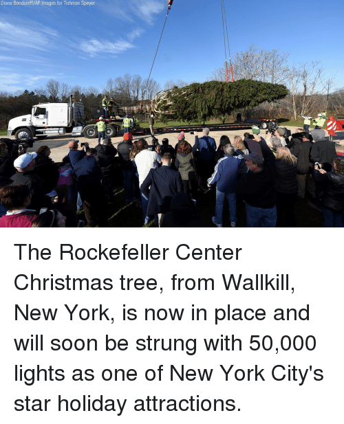 Christmas, Memes, and New York: Diane Bondareff/AP Images for Tishman Speyer The Rockefeller Center Christmas tree, from Wallkill, New York, is now in place and will soon be strung with 50,000 lights as one of New York City's star holiday attractions.