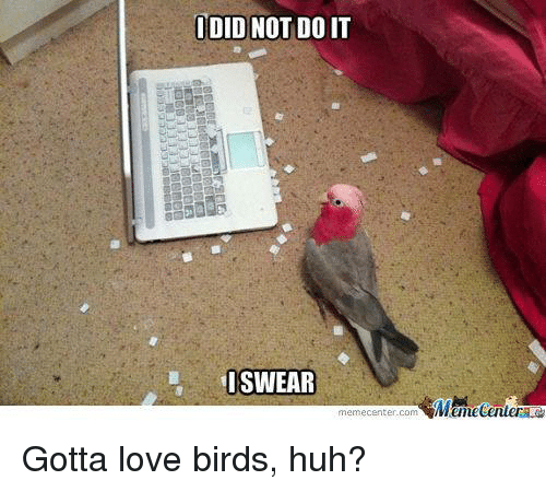 love bird: DID NOT DOIT  SWEAR  memecenter.com  Mumecenter Gotta love birds, huh?