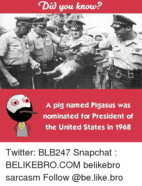 Memes, 🤖, and Pig: Did you know?  A pig named Pigasus was  nominated for President of  the United States in 1968 Twitter: BLB247 Snapchat : BELIKEBRO.COM belikebro sarcasm Follow @be.like.bro
