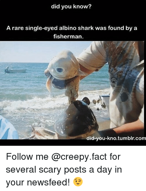 sharking: did you know?  A rare single-eyed albino shark was found by a  fisherman  did-you-kno.tumblr.com Follow me @creepy.fact for several scary posts a day in your newsfeed! 😉