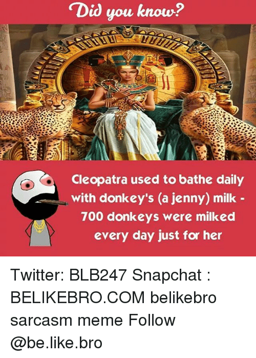 Be Like, Donkey, and Meme: Did you know?  Cleopatra used to bathe daily  with donkey's (a jenny) milk  700 donkeys were milked  every day just for her Twitter: BLB247 Snapchat : BELIKEBRO.COM belikebro sarcasm meme Follow @be.like.bro