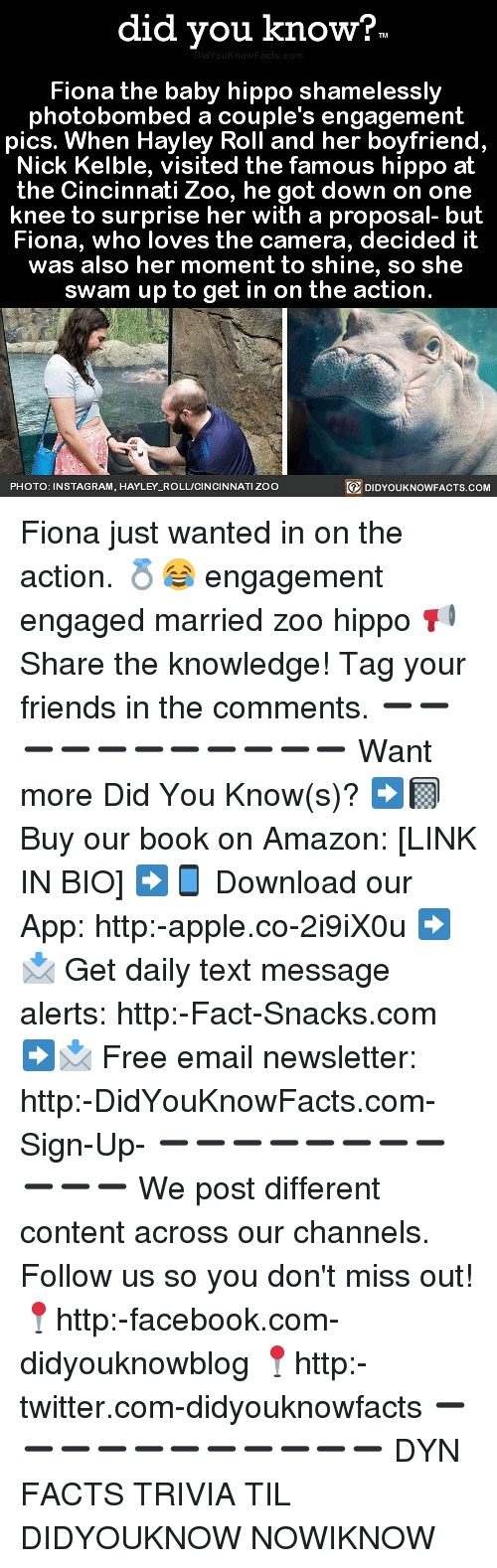 Amazon, Apple, and Facebook: did you know?  Fiona the baby hippo shamelessly  photobombed a couple's engagement  pics. When Hayley Roll and her boyfriend  Nick Kelble, visited the famous hippo at  the Cincinnati Zoo, he got down on one  knee to surprise her with a proposal- but  Fiona, who loves the camera, decided it  was also her moment to shine, so she  swam up to get in on the action.  PHOTO: INSTAGRAM, HAYLEY_ROLL/CINCINNATI ZOC  回DIDYOUKNOWFACTS.COM Fiona just wanted in on the action. 💍😂 engagement engaged married zoo hippo 📢 Share the knowledge! Tag your friends in the comments. ➖➖➖➖➖➖➖➖➖➖➖ Want more Did You Know(s)? ➡📓 Buy our book on Amazon: [LINK IN BIO] ➡📱 Download our App: http:-apple.co-2i9iX0u ➡📩 Get daily text message alerts: http:-Fact-Snacks.com ➡📩 Free email newsletter: http:-DidYouKnowFacts.com-Sign-Up- ➖➖➖➖➖➖➖➖➖➖➖ We post different content across our channels. Follow us so you don't miss out! 📍http:-facebook.com-didyouknowblog 📍http:-twitter.com-didyouknowfacts ➖➖➖➖➖➖➖➖➖➖➖ DYN FACTS TRIVIA TIL DIDYOUKNOW NOWIKNOW