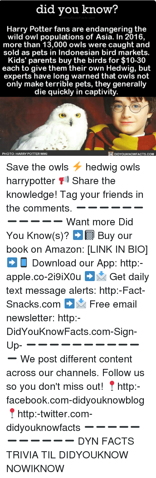amazone: did you know?  Harry Potter fans are endangering the  wild owl populations of Asia. In 2016,  more than 13,000 owls were caught and  sold as pets in Indonesian bird markets.  Kids' parents buy the birds for $10-30  each to give them their own Hedwig, but  experts have long warned that owls not  only make terrible pets, they generally  die quickly in captivity.  PHOTO: HARRY POTTER WIKI  DIDYOUKNOWFACTS.COM Save the owls ⚡️ hedwig owls harrypotter 📢 Share the knowledge! Tag your friends in the comments. ➖➖➖➖➖➖➖➖➖➖➖ Want more Did You Know(s)? ➡📓 Buy our book on Amazon: [LINK IN BIO] ➡📱 Download our App: http:-apple.co-2i9iX0u ➡📩 Get daily text message alerts: http:-Fact-Snacks.com ➡📩 Free email newsletter: http:-DidYouKnowFacts.com-Sign-Up- ➖➖➖➖➖➖➖➖➖➖➖ We post different content across our channels. Follow us so you don't miss out! 📍http:-facebook.com-didyouknowblog 📍http:-twitter.com-didyouknowfacts ➖➖➖➖➖➖➖➖➖➖➖ DYN FACTS TRIVIA TIL DIDYOUKNOW NOWIKNOW