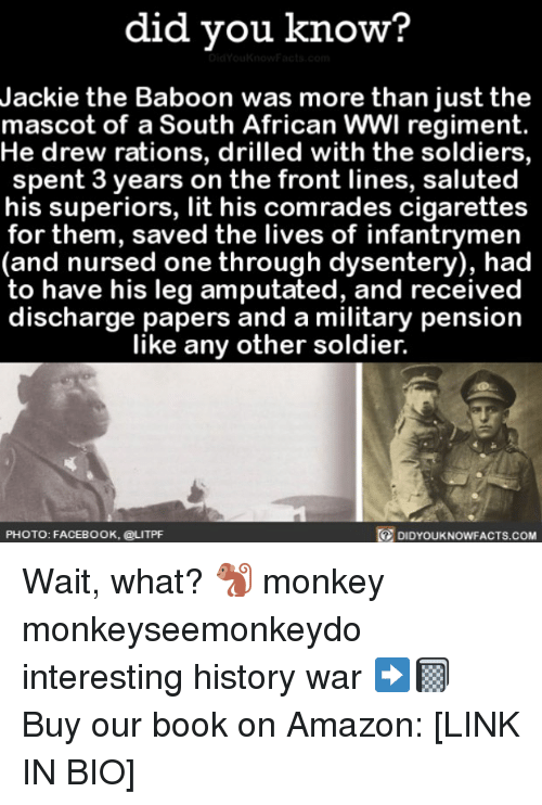 mascots: did you know?  Jackie the Baboon was more than just the  mascot of a South African WWl regiment.  He drew rations, drilled with the soldiers,  spent 3 years on the front lines, saluted  his superiors, lit his comrades cigarettes  for them, saved the lives of infantrymen  (and nursed one through dysentery), had  to have his leg amputated, and received  discharge papers and a military pension  like any other soldier.  PHOTO: FACEBOOK, @LITPF  DIDYOUKNOWFACTS.coM Wait, what? 🐒 monkey monkeyseemonkeydo interesting history war ➡️📓 Buy our book on Amazon: [LINK IN BIO]