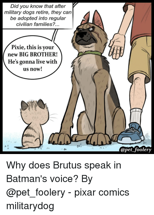 brutus: Did you know that after  military dogs retire, they can  be adopted into regular  civilian families?  Pixie, this is your  new BIG BROTHER!  He's gonna live with  us now!  in  Opet foolery Why does Brutus speak in Batman's voice? By @pet_foolery - pixar comics militarydog