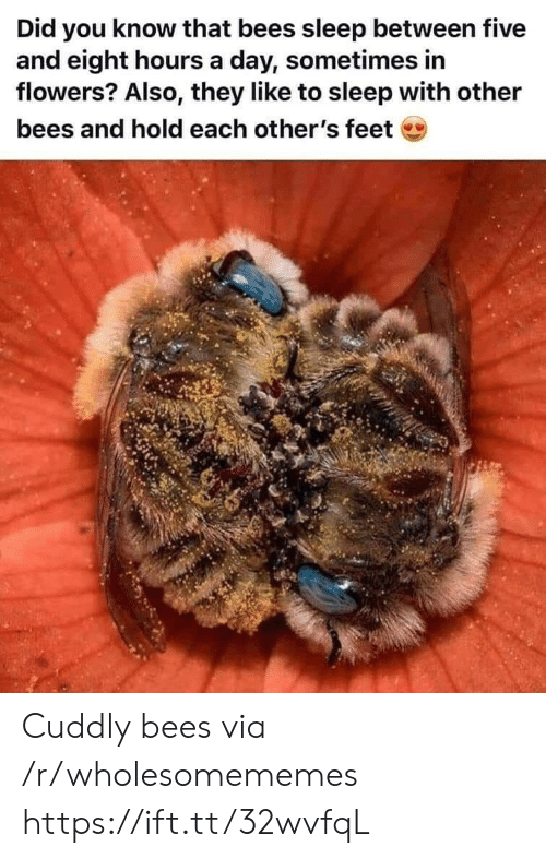 Flowers, Sleep, and Bees: Did you know that bees sleep between five  and eight hours a day, sometimes in  flowers? Also, they like to sleep with other  bees and hold each other's feet Cuddly bees via /r/wholesomememes https://ift.tt/32wvfqL