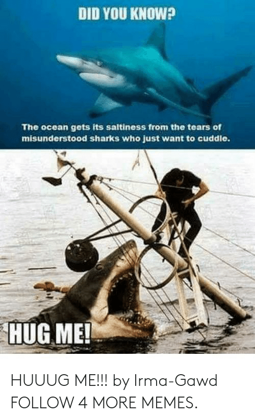 Gawd: DID YOU KNOW?  The ocean gets its saltiness from the tears of  misunderstood sharks who just want to cuddle.  HUG ME! HUUUG ME!!! by Irma-Gawd FOLLOW 4 MORE MEMES.