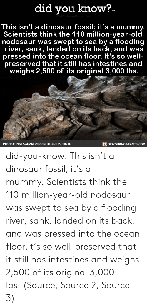 Pressed: did you know?  TM  DidYouKnowFacta.com  This isn't a dinosaur fossil; it's a mummy.  Scientists think the 110 million-year-old  nodosaur was swept to sea by a flooding  river, sank, landed on its back, and was  pressed into the ocean floor. It's so well-  preserved that it still has intestines and  weighs 2,500 of its original 3,000 lbs.  DIDYOUKNOWFACTS.COM  PHOTO: INSTAGRAM, @ROBERTCLARKP HOTO did-you-know:  This isn't a dinosaur fossil; it's a mummy. Scientists think the 110 million-year-old nodosaur was swept to sea by a flooding river, sank, landed on its back, and was pressed into the ocean floor.It's so well-preserved that it still has intestines and weighs 2,500 of its original 3,000 lbs. (Source, Source 2, Source 3)