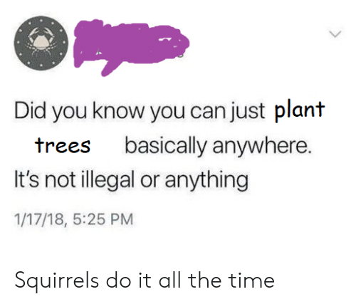 Time, Trees, and All The: Did you know you can just plant  basically anywhere.  trees  It's not illegal or anything  1/17/18, 5:25 PM Squirrels do it all the time